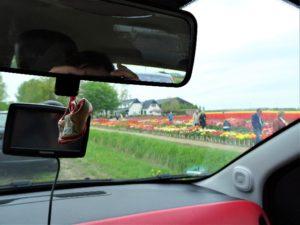 Zur Tulpenblüte nach Holland Bild 12 bearbeitet klein
