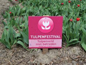 Zur Tulpenblüte nach Holland Bild 6 bearbeitet klein