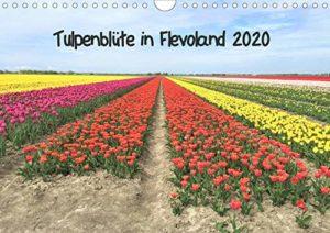Meine Calvendo-Kalender Tulpenblüte in Flevoland
