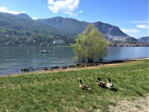 Alles über den Lago Maggiore Aufmacher 2 bearbeitet klein