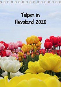 Meine Calvendo-Kalender Tulpen in Flevoland
