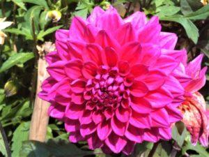 Blumeninsel Mainau Aufmacher 2 bearbeitet klein