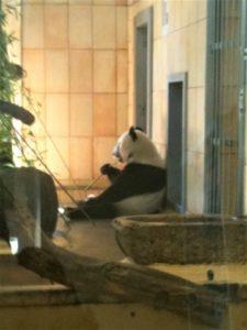 Pandas in Europa Aufmacher 2 bearbeitet klein
