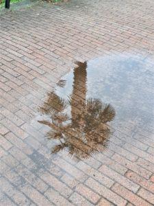 Regen am Lago Maggiore Bild 3 bearbeitet klein