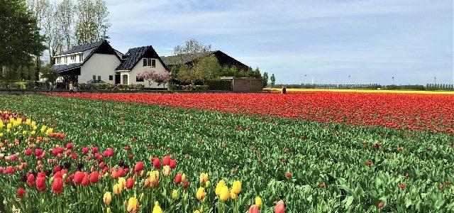 9 Blogger verraten ihre besten Niederlande-Tipps
