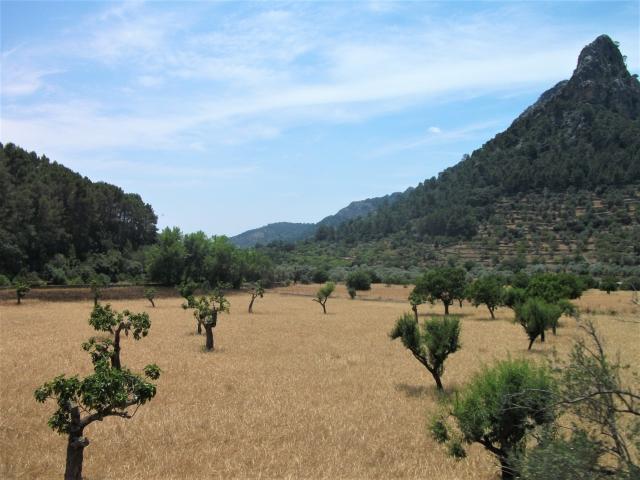 Lust auf Mallorca Bild 6 bearbeitet klein
