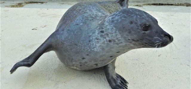Tierpark Bochum: Zoobewohner hautnah erleben