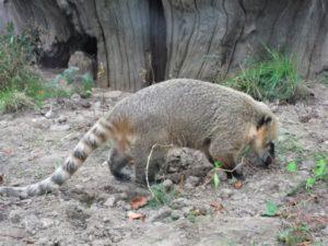 Tierpark Bochum Bild 11 bearbeitet klein