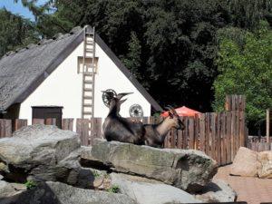 Tierpark Bochum Bild 3 bearbeitet klein