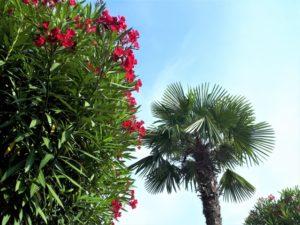 Urlaub am Lago Maggiore in Coronazeiten Bild 3 bearbeitet klein