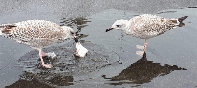 Lübecker Bucht im Regen: Was du bei schlechtem Wetter unternehmen kannst