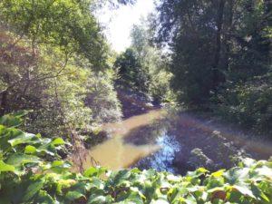 Naturschutzgebiet Fondotoce Aufmacher 2 bearbeitet klein