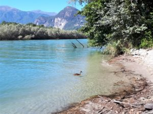 Naturschutzgebiet Fondotoce Bild 5 bearbeitet klein