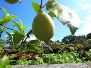 Cannero Riviera am Lago Maggiore: Der Ort, wo die Zitronen blühen - Die bunte Christine
